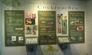 Cockroach exhibit at Harvard Museum