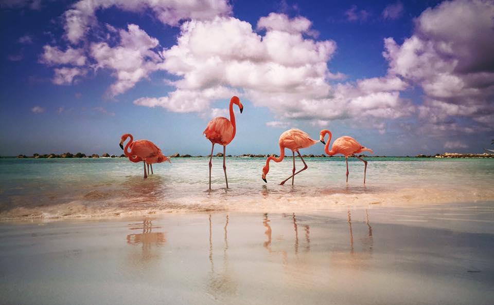 A Private Caribbean Island at the Renaissance Aruba Resort