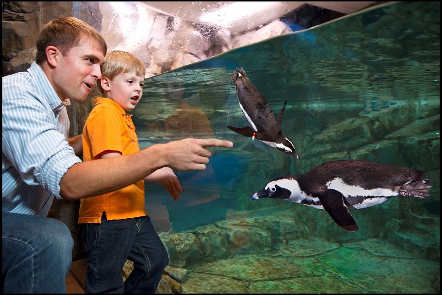 Inside the Georgia Aquarium in Atlanta
