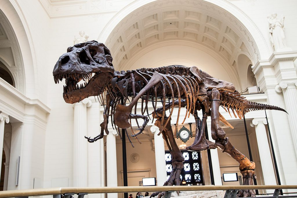 Sue the T-Rex at the Field Museum.