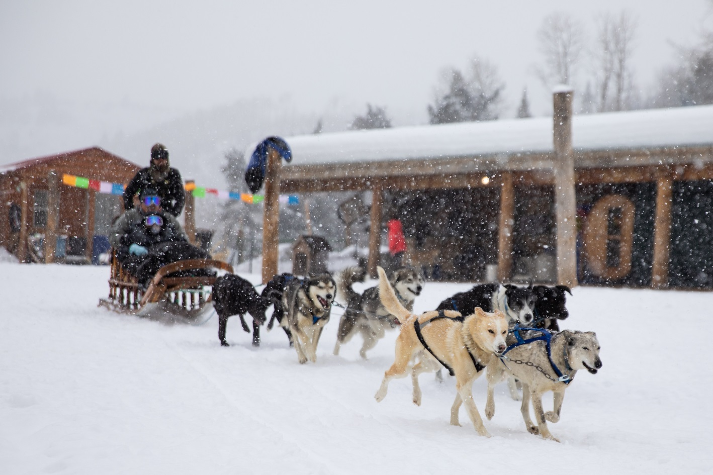 Gant Aspen has partnered with local outfitters to create private experiences from dog sled tours, guided snowshoe tours, uphill skiing and more.