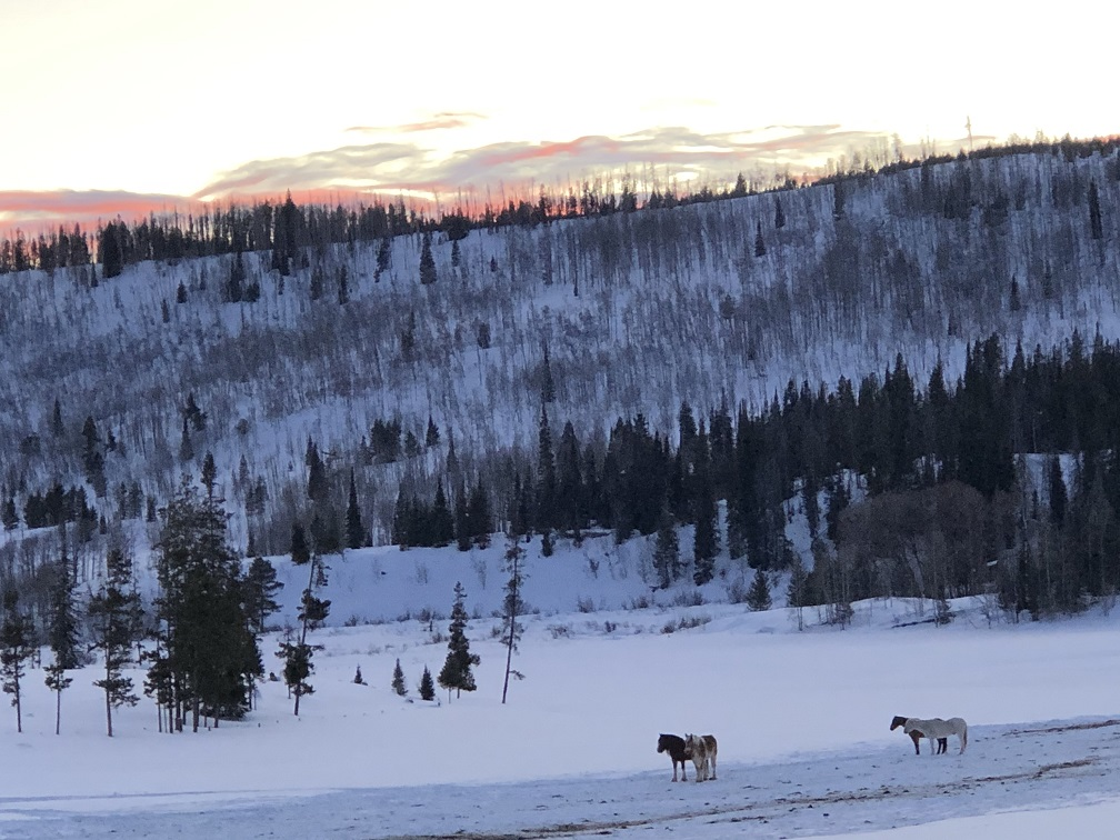 A few of the 105-herd of quarter horses in the gloaming at Vista Verde Ranch