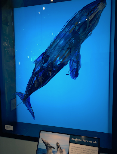 A whale built from plastic found in the ocean and on beaches. One of many sculptures in this art installation