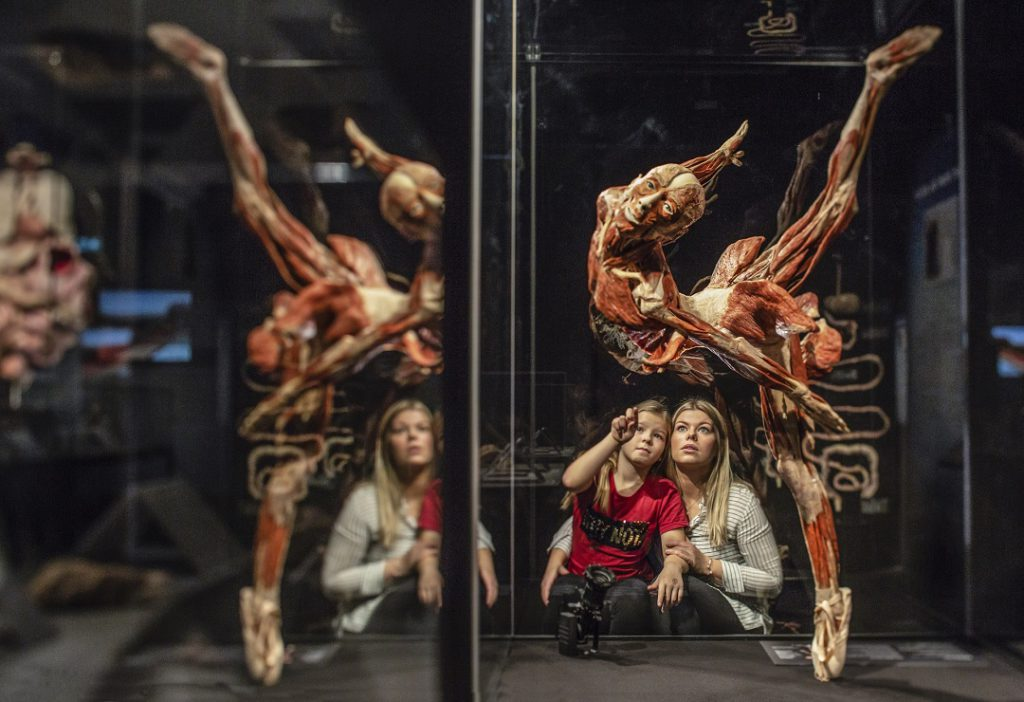 Body Worlds & the Cycle of Life, Museum of Science, Boston