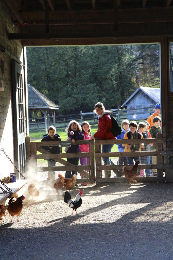 Children's Farmyard, Shelburne Farms