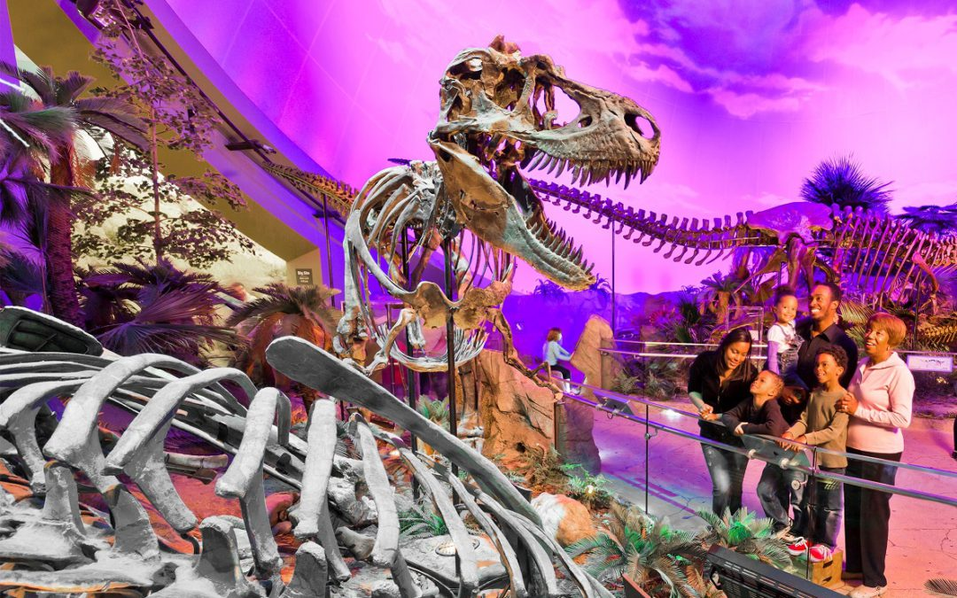 """Digging for Dinosaurs – """"A Girl Can Be a Princess and a Scientist"""""""