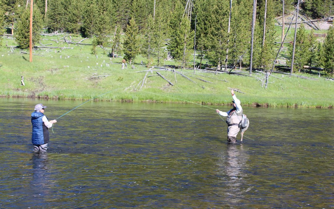A mind game: fly-fishing in Yellowstone National Park