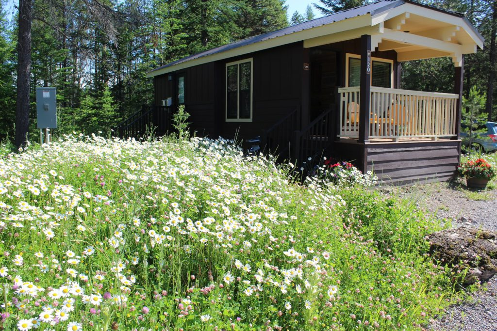 Our cozy cabin surrounded by wildflowers at West Glacier RV Park