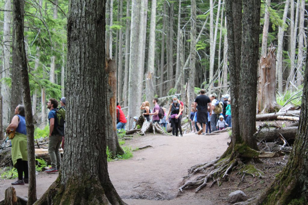 Hikers on trail to Avalanche Lake viewing a bear in the distance