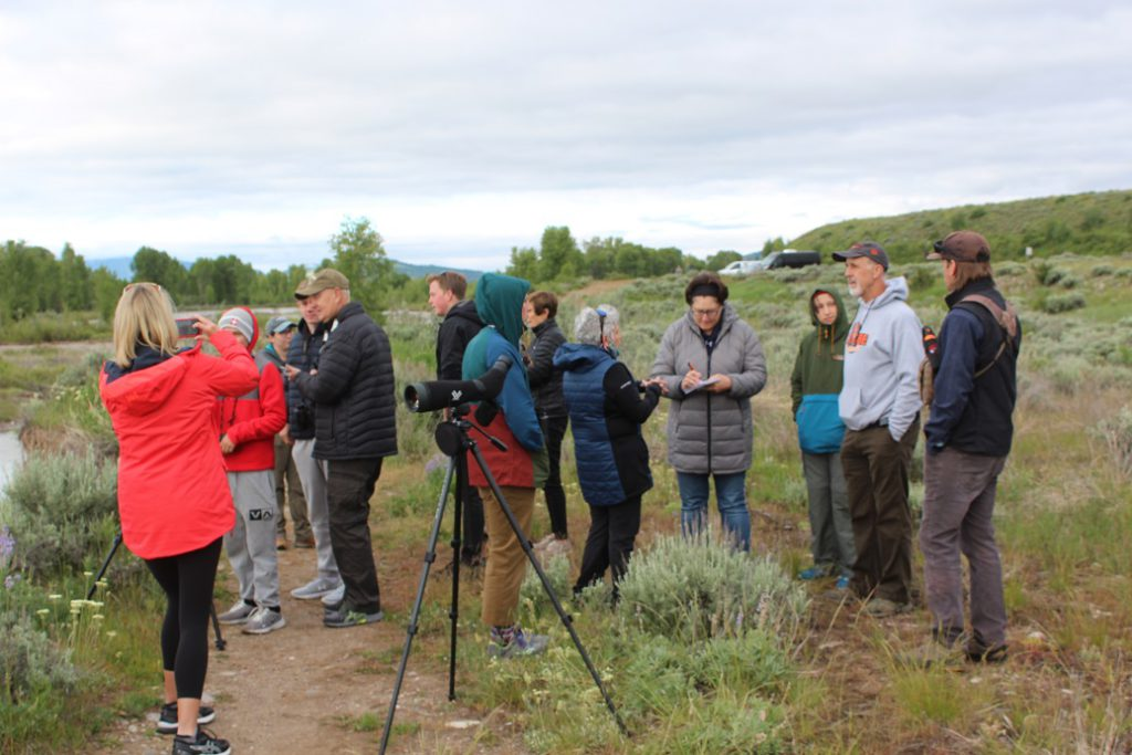 Moose sighting draws a small crowd in Grand Teton National Park - our guide Dawson Smith at far right