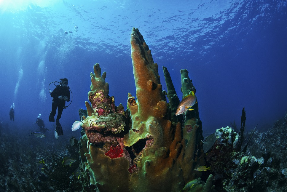 Scuba Diving. Hol Chan, Reef, Central Coast