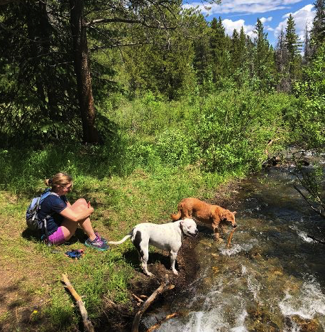 Doggies frolic in the water along the Burro Trail