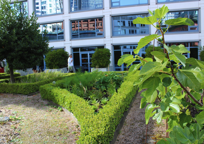 Produce and herbs growing on the terrace at Fairmont Waterfront