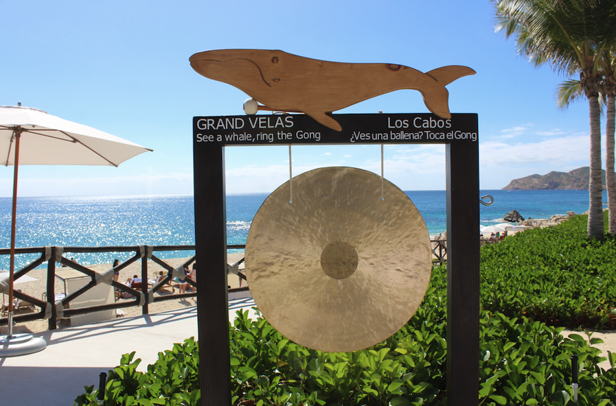 Spot a gray whale, ring the gong at Grand Velas Cabo