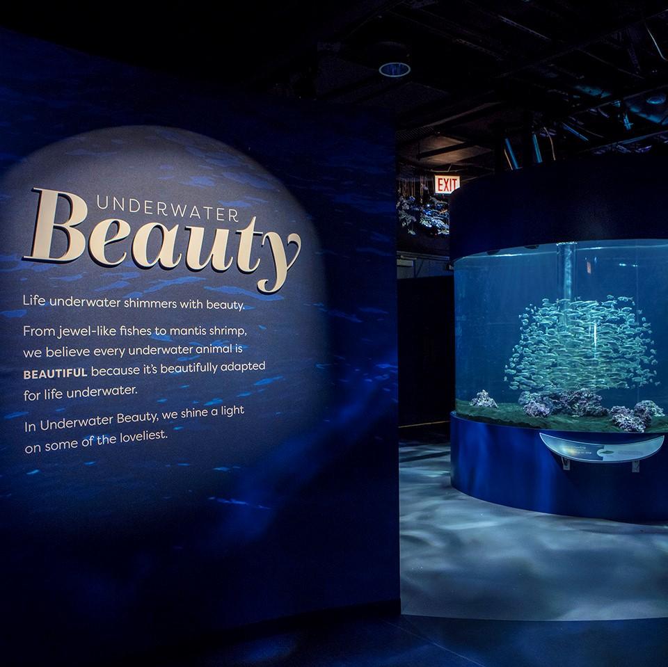 Underwater Beauty exhibit at Chicago's Shedd Aquarium