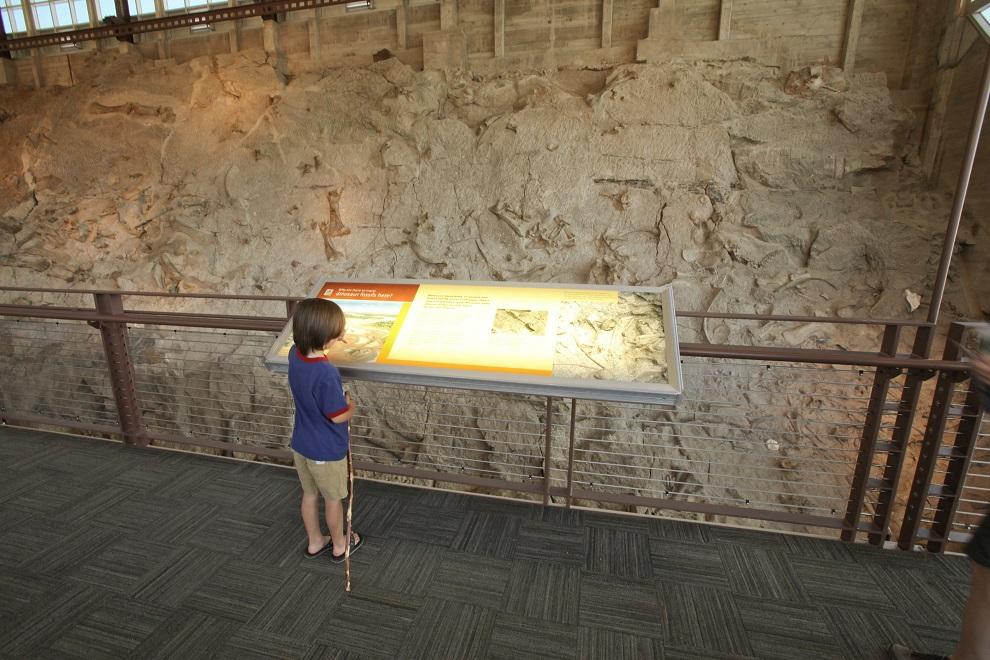 Wall of Bones, Dinosaur National Monument