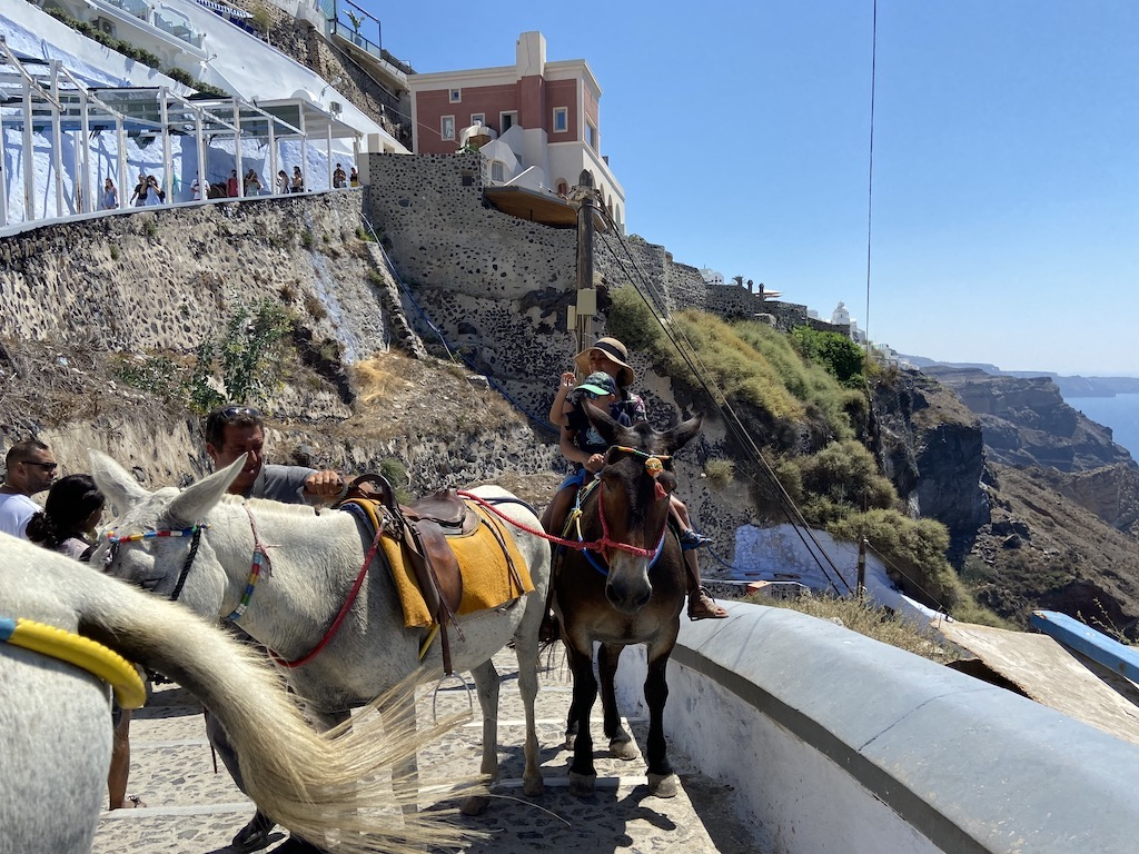 The donkeys of Santorini are famous but not hiking on the same trail is not recommended
